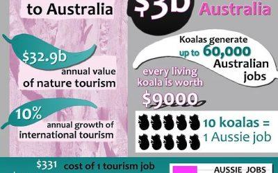 Koala Tourism