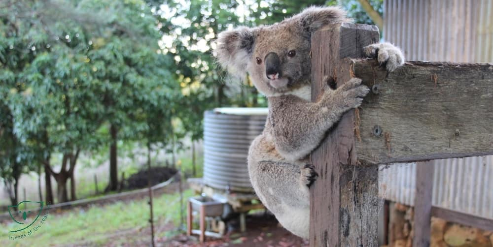 Homes for everybody Wild Koala Day 2018