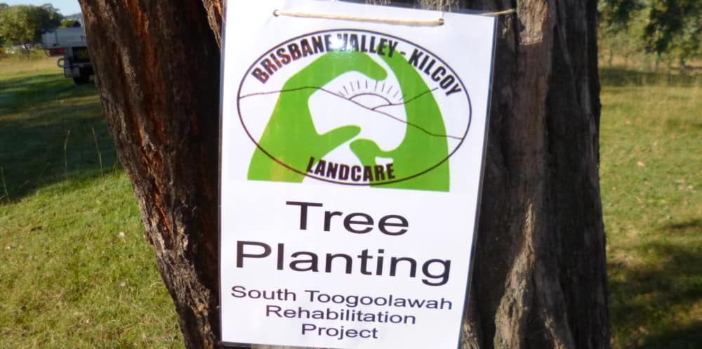 Tree Planting for Wild Koala Day