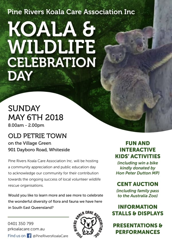 wild koala day event pine rivers queensland