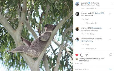 Wild Koala Day on Australia instagram