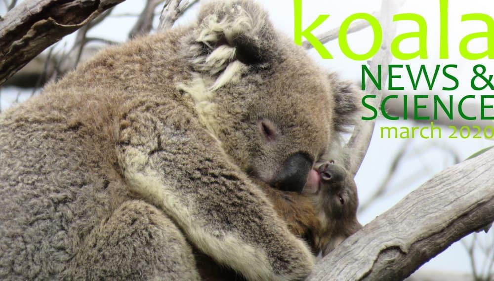 Koala News & Science March 2020