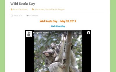 Wildlife Around The World: Wild Koala Day