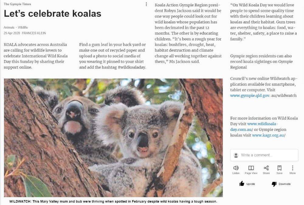 wild koala day in gympie times newspaper