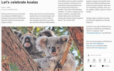 Wild Koala Day in Gympie Times