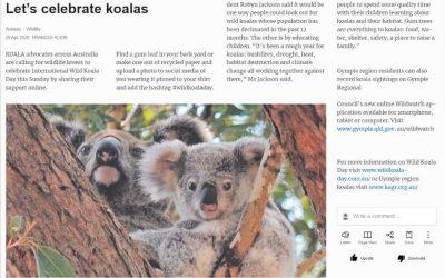 Wild Koala Day in Gympie Times