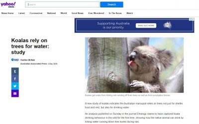 Wild Koala Day Yahoo news
