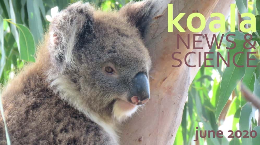 Koala News & Science June 2020