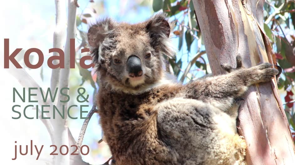 Koala News & Science July 2020