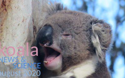 Koala News & Science August 2020