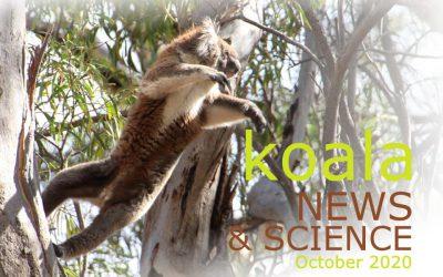 Koala News & Science October 2020