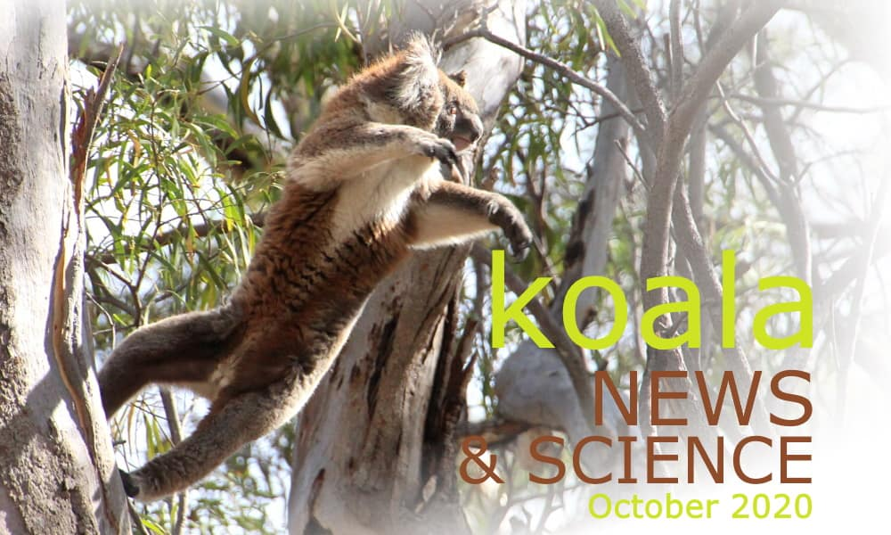 Koala News & Science October 2020