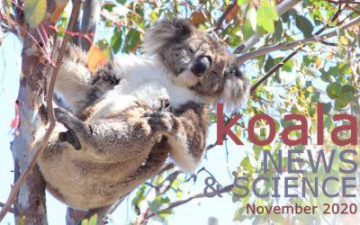 Koala News & Science November 2020