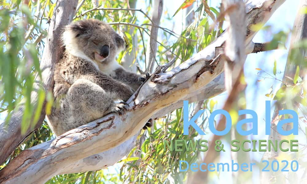 Koala News & Science December 2020