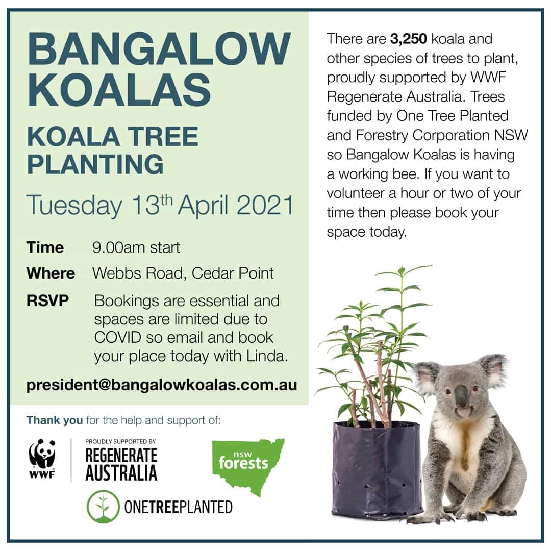 koala tree planting April 2021 NSW