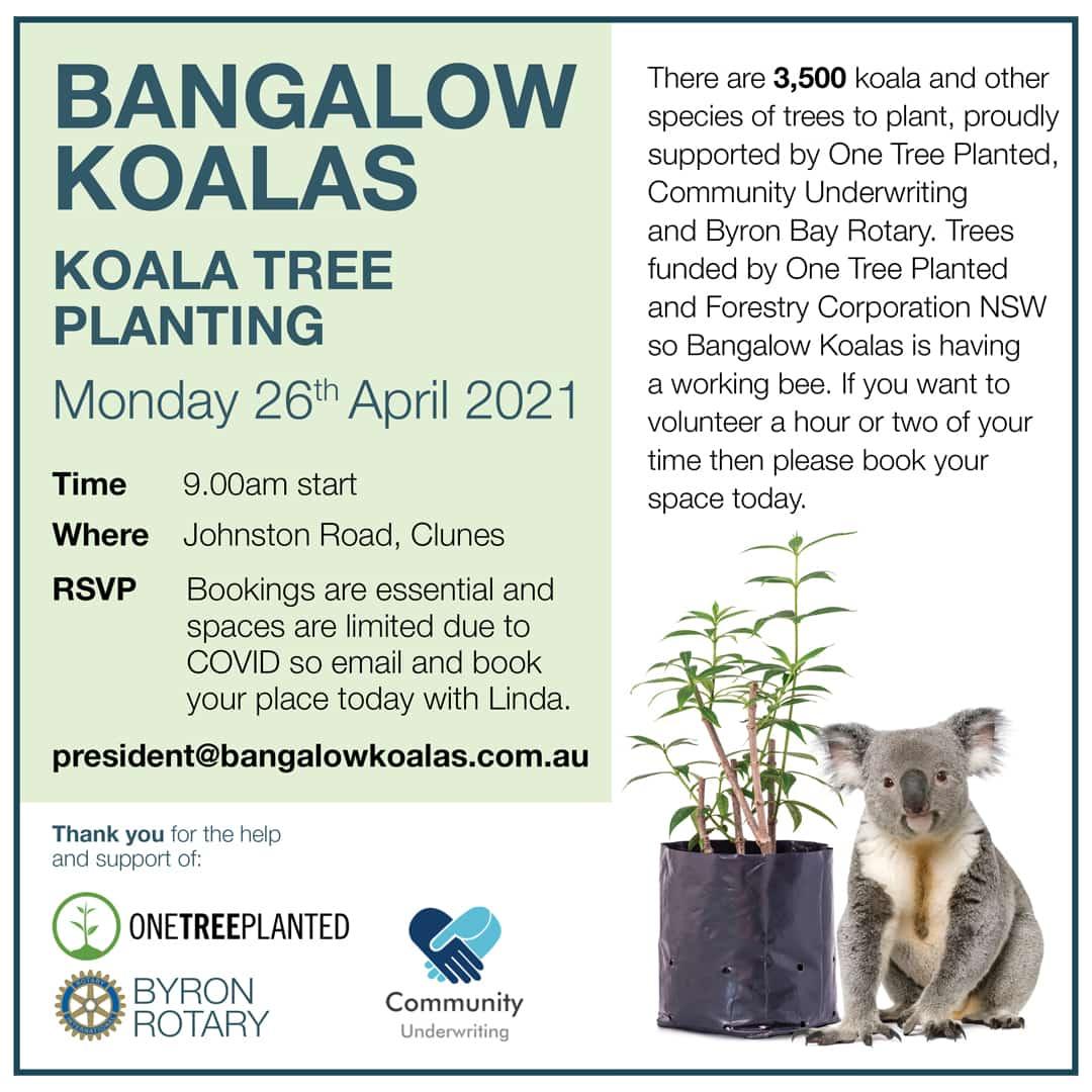 koala tree planting bangalow NSW