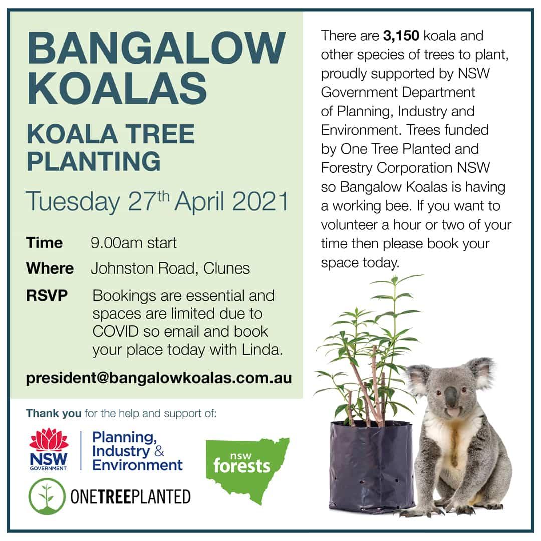 BANGALOW koalas working bee