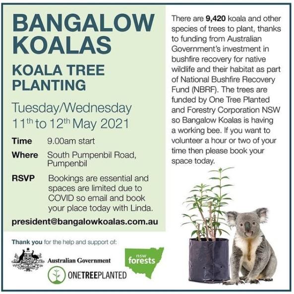 Tree planting event wild koala day NSW