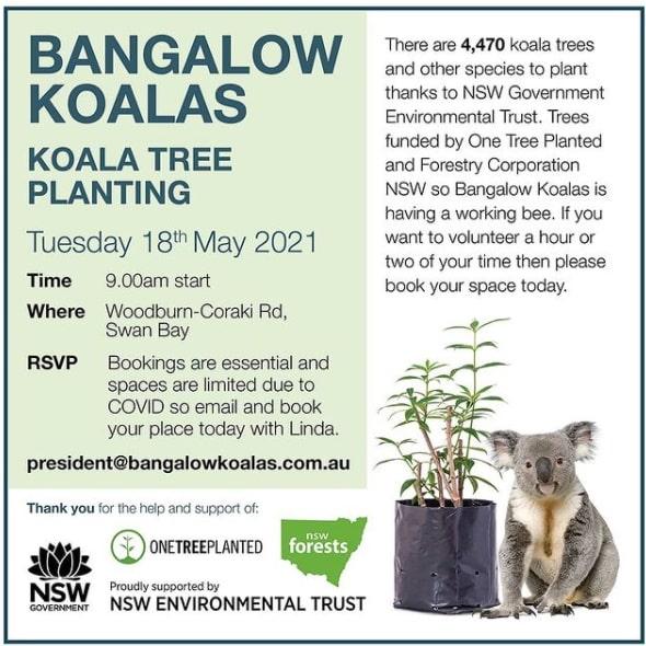 Tree planting event May koala NSW