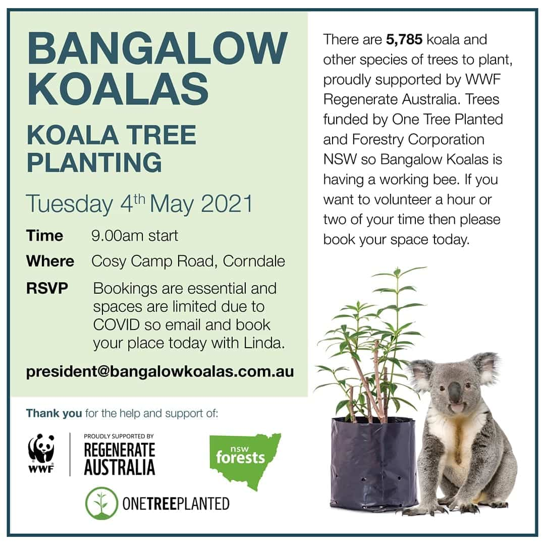 Tree planting wild koala day northern NSW