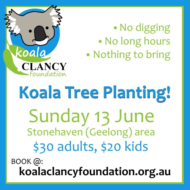tree planting for koalas 2021
