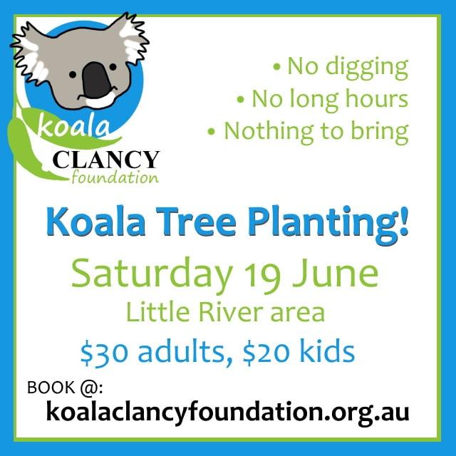 tree planting for koalas Victoria
