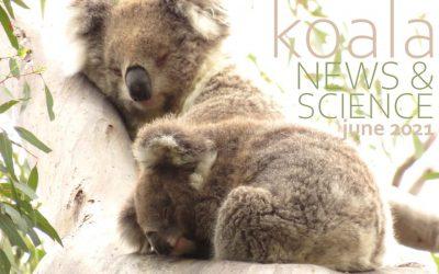 Koala News & Science June 2021