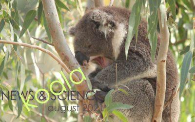 Koala News & Science August 2021