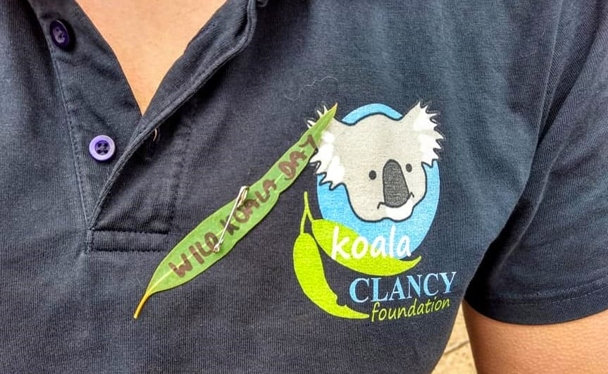 On Wild Koala Day, May 3, wear a gum leaf to show you love koalas