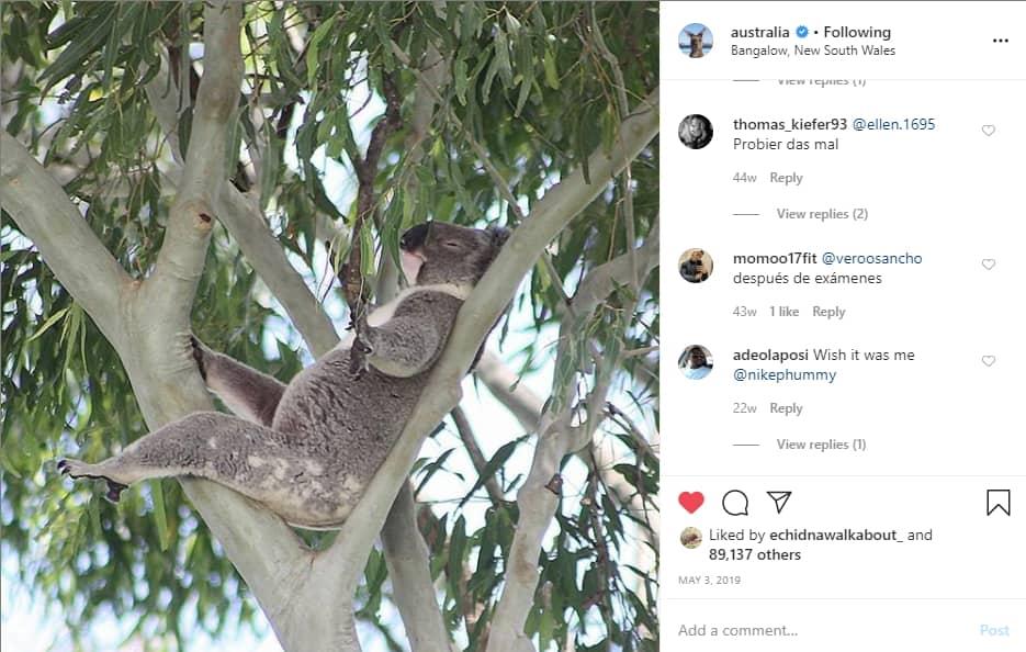 wild koala day on Australia instagram