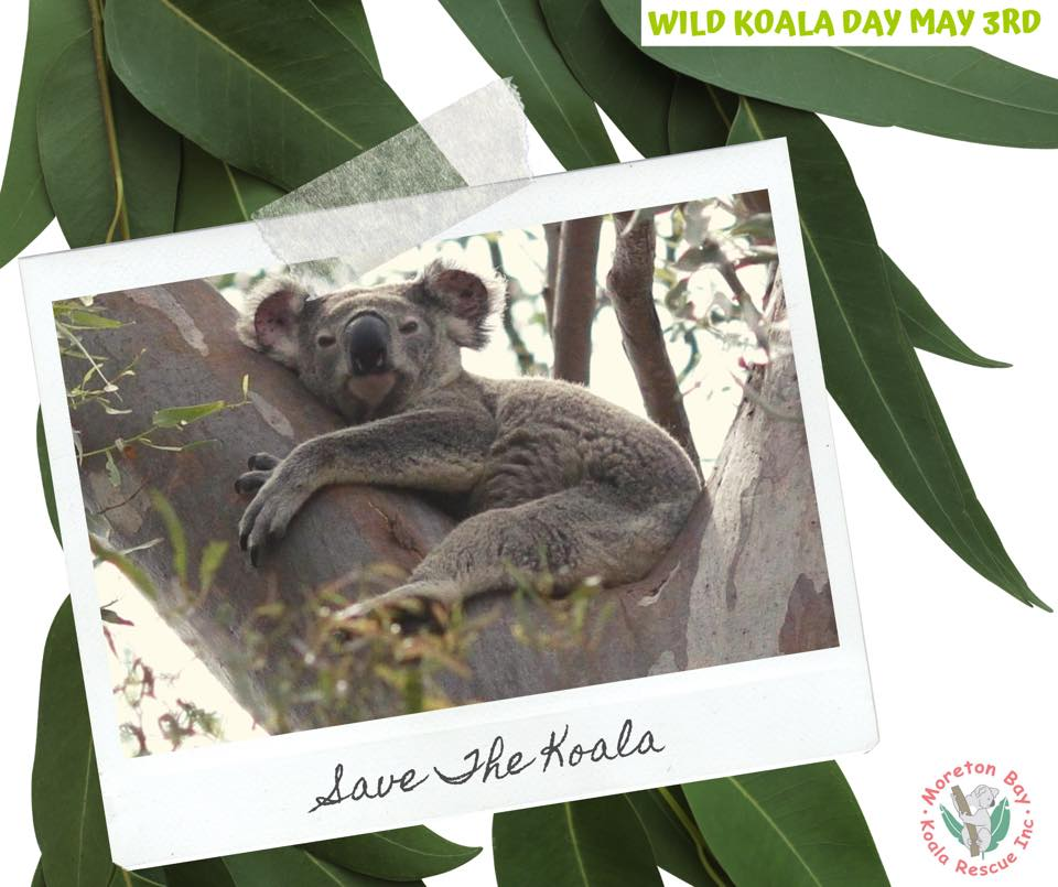 Moreton Bay Koala Care Save the koala
