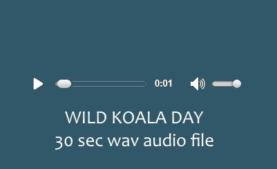 Community Service Announcement: Wild Koala Day May 3 2020