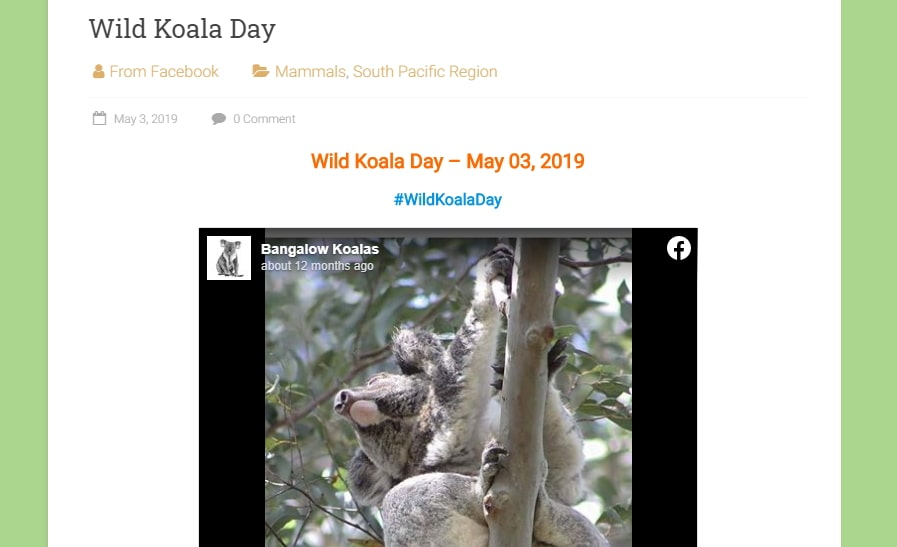 Wildlife Around The World: Wild Koala Day