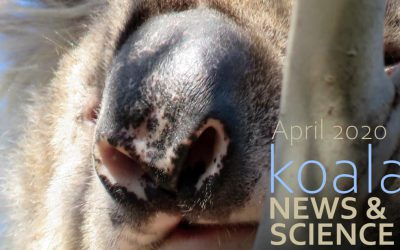 Koala News & Science April 2020