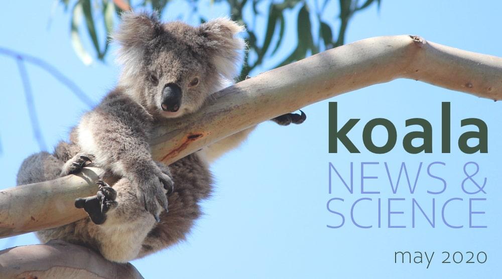 Koala News & Science May 2020