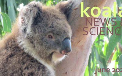 Koala News & Science June 2020