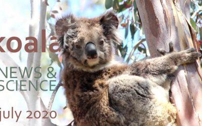 Koala News & Science July 2020