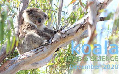 Koala News & Science December 2020