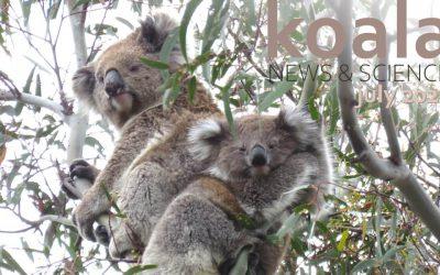 Koala News & Science July 2021