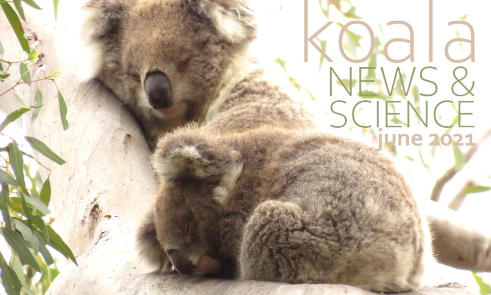 koala news science june 2021