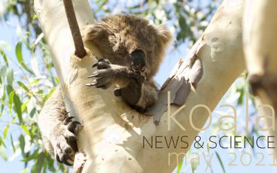 Koala News & Science May 2021