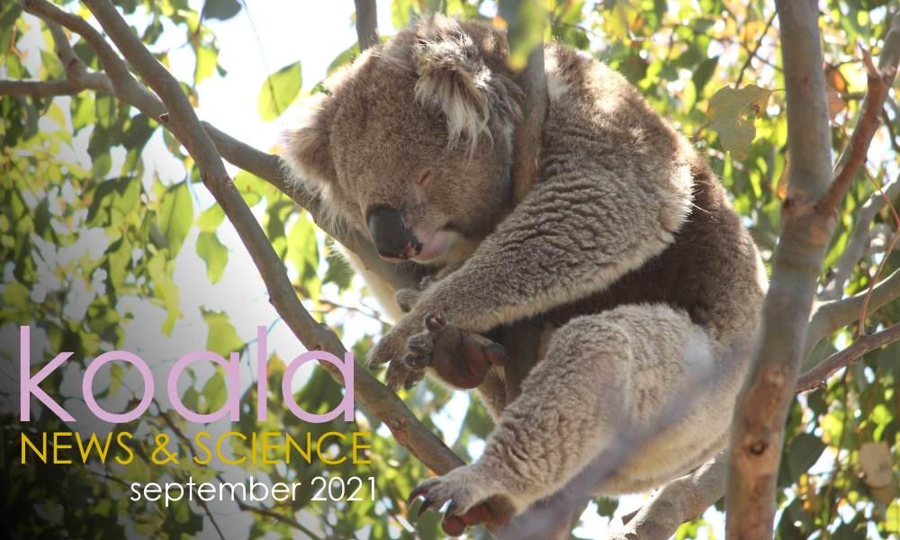 Koala News & Science September 2021